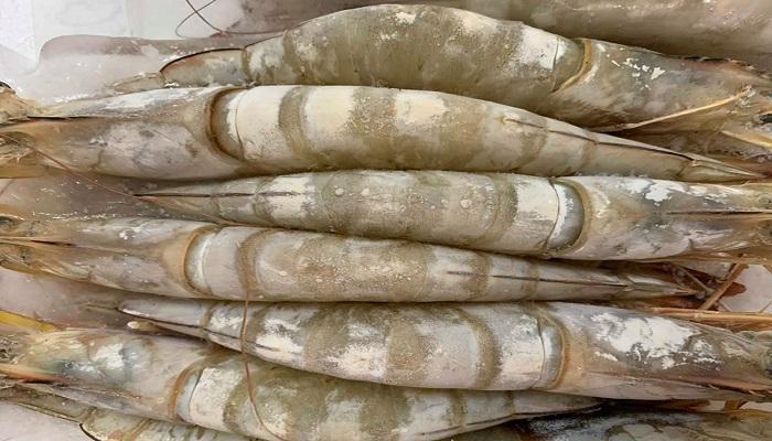 Điểm khác biệt giữa tôm sú nuôi Quảng canh và Tôm sú nuôi Thâm Canh