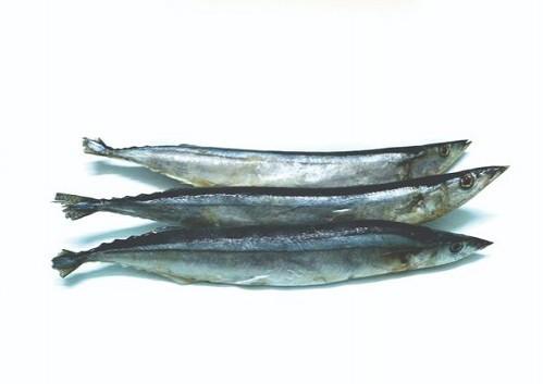 Cá Kìm
