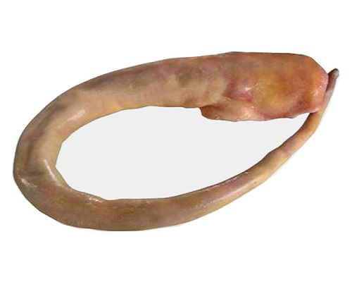 Đuôi Trâu Ấn M57